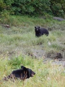 Hello, bears!