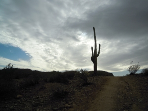 San Tan Regional Park; Photo Credit Doree Weller