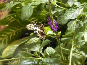 For absolutely no reason, here's a butterfly.  Museum of Natural History, Photo credit Doree Weller