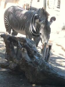 San Diego Zoo Photo Credit: Doree Weller