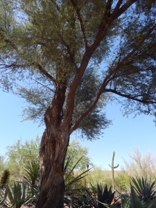 Desert Botanical Gardens, Phoenix AZ Photo credit: Doree Weller