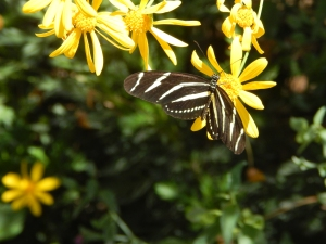 Desert Botanical Gardens, Phoenix AZ; Photo Credit: Doree Weller