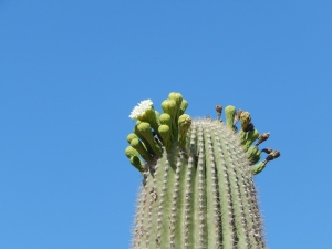Desert Botanical Gardens; Phoenix AZ Photo Credit: Doree Weller