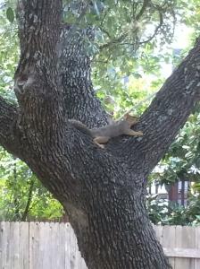 Cedar Park, Texas Photo Credit: Doree Weller