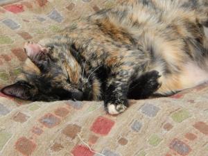 Look!  A fat cat!
