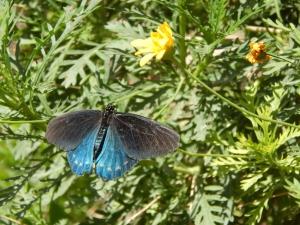 Desert Botanical Gardens, Phoenix AZ Photo Credit: Doree Weller