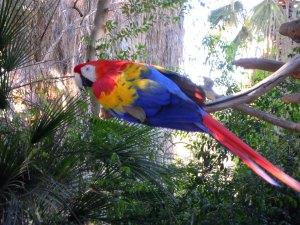 Phoenix Zoo Photo Credit: Doree Weller