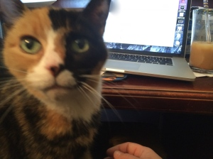 """Get off the computer and pet me!"" Photo Credit: Doree Weller"