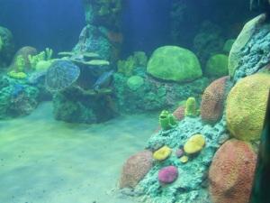 Sea World, San Diego Photo Credit: Doree Weller