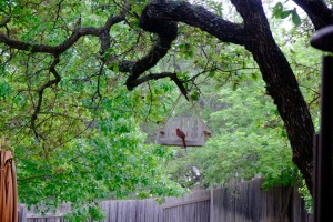 Austin, TX Photo Credit: Doree Weller