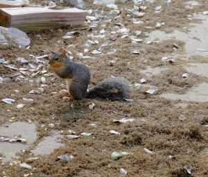 That's nuts! Photo Credit: Doree Weller